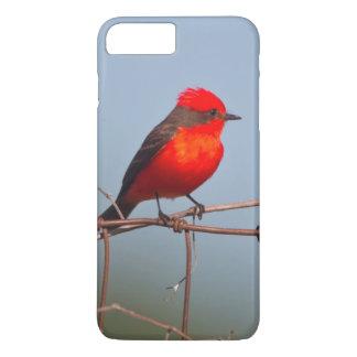Vermilion Flycatcher (Pyrocephalus Rubinus) iPhone 8 Plus/7 Plus Case