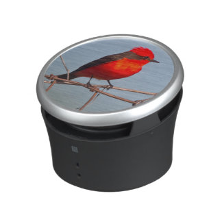 Vermilion Flycatcher (Pyrocephalus Rubinus) Speaker