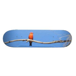 Vermilion Flycatcher Skate Board