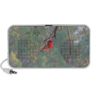Vermilion Flycatcher Speaker System