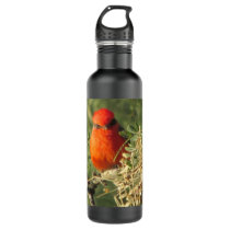 Vermilion Flycatcher Water Bottle
