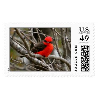 Vermillion Flycatcher-2,  Kay Miller 2007 Stamp