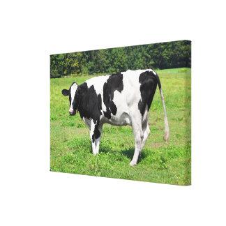 Vermont Cow Canvas Print
