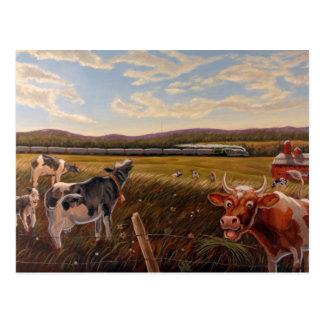 Vermont Cow Postcard