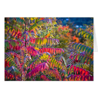 Vermont Foliage Greeting Card