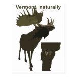 Vermont moose postcard