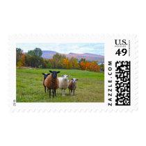 Vermont Sheep in Autumn Postage
