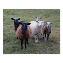 Vermont sheep Welcoming Committee Poster