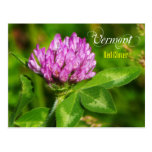 Vermont State Flower: Red Clover Postcard