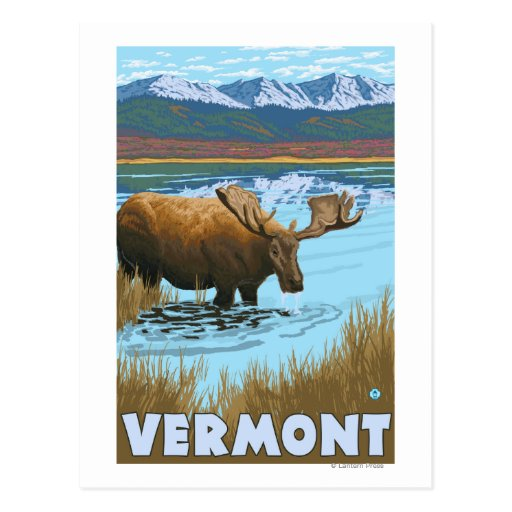 VermontMoose Drinking in Lake Post Cards