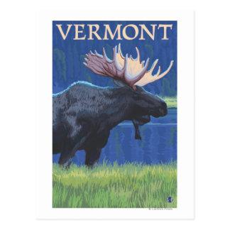 VermontMoose en el claro de luna Tarjetas Postales