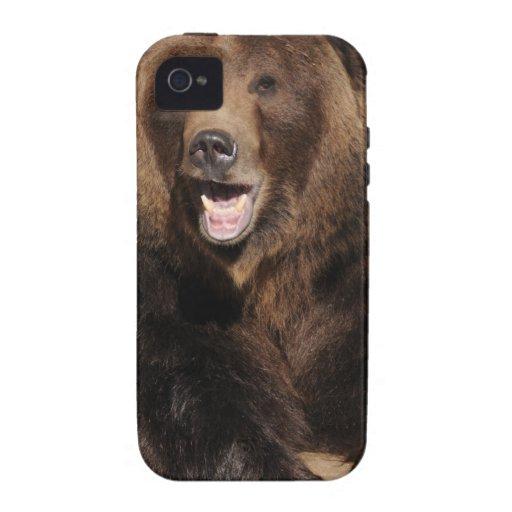 Verraco del oso grizzly iPhone 4 carcasas