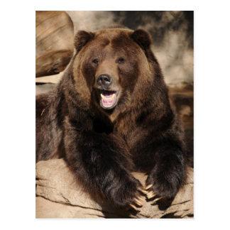 Verraco del oso grizzly tarjetas postales