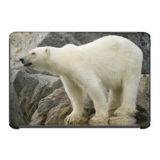 Verraco grande a lo largo de una costa rocosa en funda de iPad mini