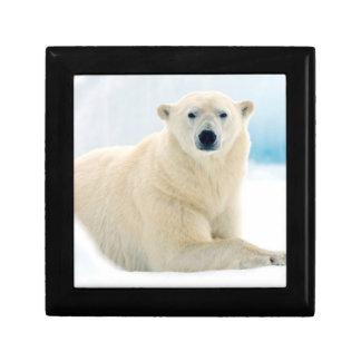 Verraco grande adulto del oso polar en el hielo cajas de regalo