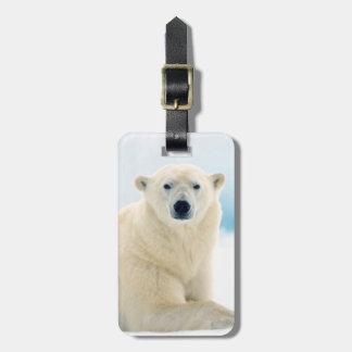 Verraco grande adulto del oso polar en el hielo etiquetas bolsas