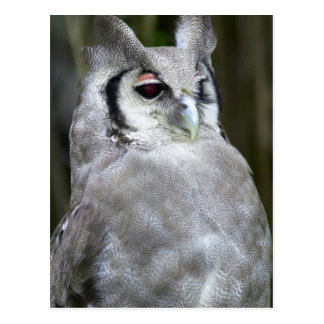 Verreaux's Eagle-Owl (Bubo Lacteus), Gauteng Postcard