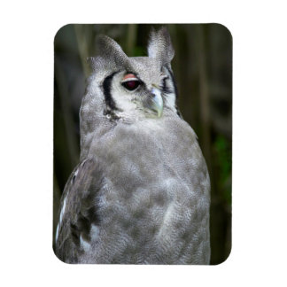 Verreaux's Eagle-Owl (Bubo Lacteus), Gauteng Rectangular Photo Magnet