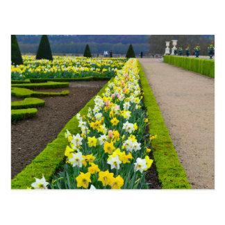 Versailles gardens flowers France Postcard