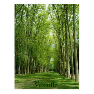 Versailles Trees Gardens Romantic Path France Postcard