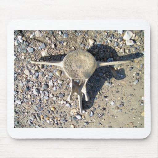 vertabra de la ballena (2) alfombrilla de raton