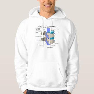 Vértebra cervical de la columna espinal humana suéter con capucha