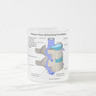 Vértebra cervical de la columna espinal humana taza cristal mate