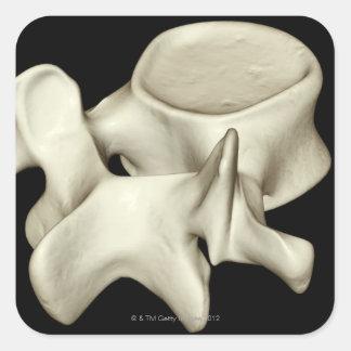 Vértebra lumbar 4 pegatinas cuadradases personalizadas