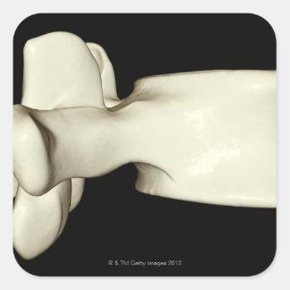 Vértebra lumbar calcomanía cuadradas personalizada