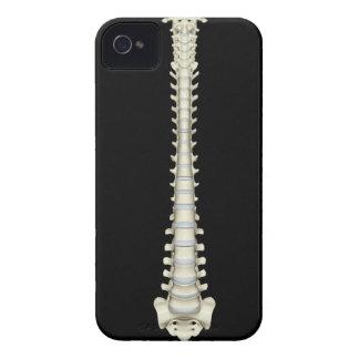Vertebral Column 2 iPhone 4 Covers