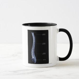 Vertebral Column 4 Mug
