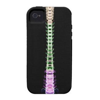 Vertebral Column Case-Mate iPhone 4 Cover