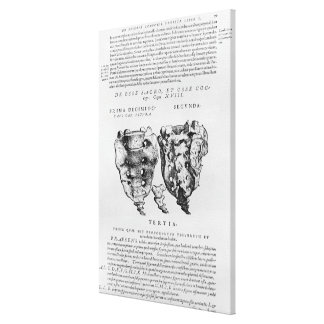 Vértebras, Cocyx (impresión de b/w) Lona Envuelta Para Galerias