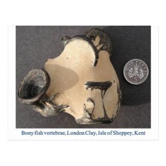 Vértebras de los pescados fósiles postales