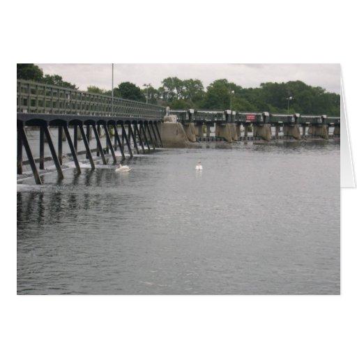 Vertedero con los cisnes, el río Támesis, Teddingt Felicitación