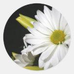 Vertical del lirio de la margarita blanca pegatina redonda