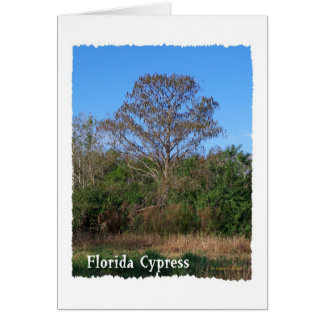 Vertical del pantano de la Florida Cypress Felicitacion