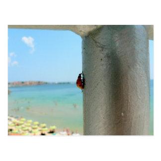 Vertical Ladybug Postcard
