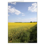 Vertical panorama of a yellow canola field in greeting cards