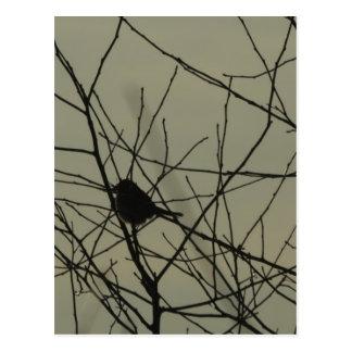 Vertical Postcard: Little Bird Postcard