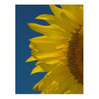 Vertical Sunflower Postcard