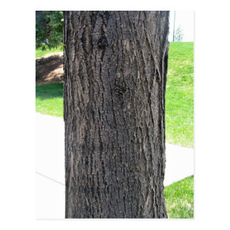 Vertical texture of tree bark surrounded by grassy postcard