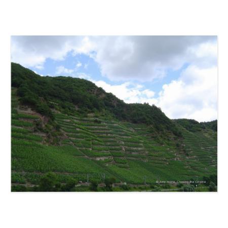 Verticle Vineyards Post Cards