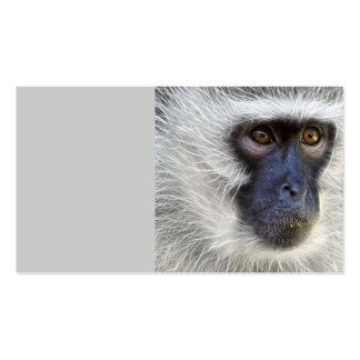 vervet-monkey-275013  vervet monkey monkey female business card