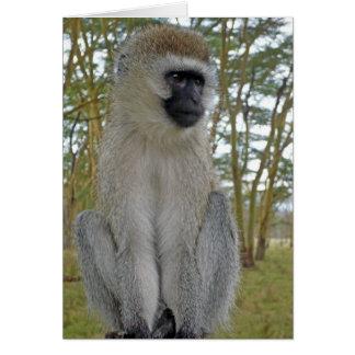 Vervet Monkey Card