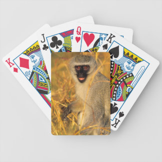 Vervet Monkey (Chlorocebus Pygerythrus) Bicycle Playing Cards