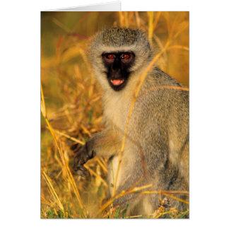 Vervet Monkey (Chlorocebus Pygerythrus) Greeting Card
