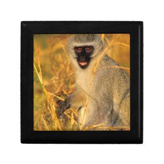 Vervet Monkey (Chlorocebus Pygerythrus) Keepsake Box