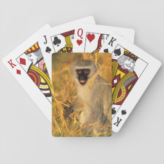 Vervet Monkey (Chlorocebus Pygerythrus) Playing Cards