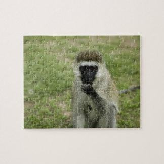 Vervet monkey eating, Africa Jigsaw Puzzle